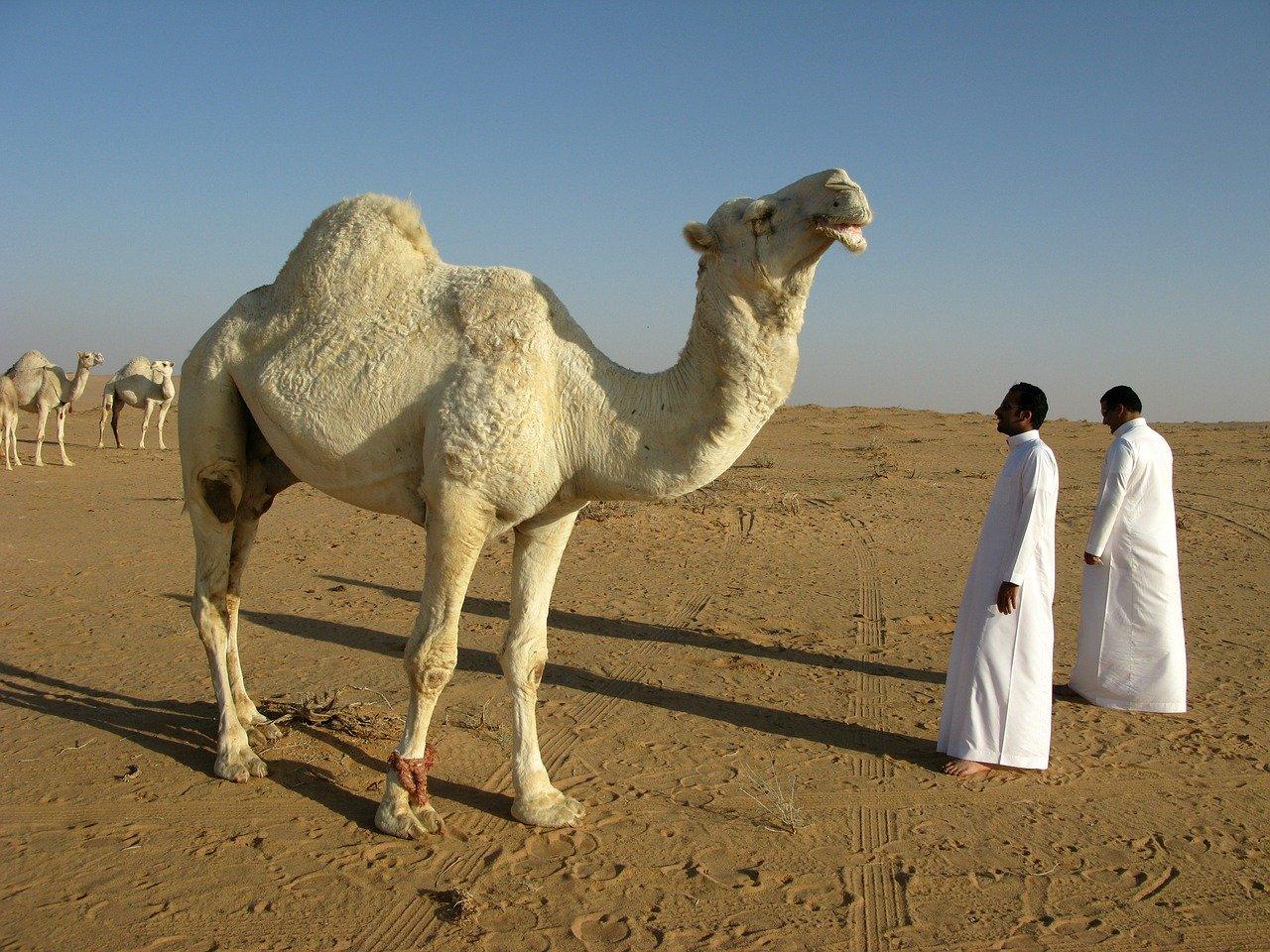saudi arabia visa application form uk